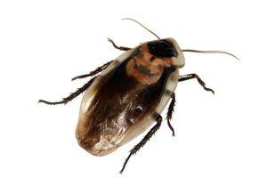 cockroach control nottingham