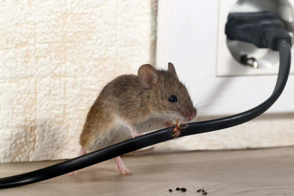 How to Prevent Mice