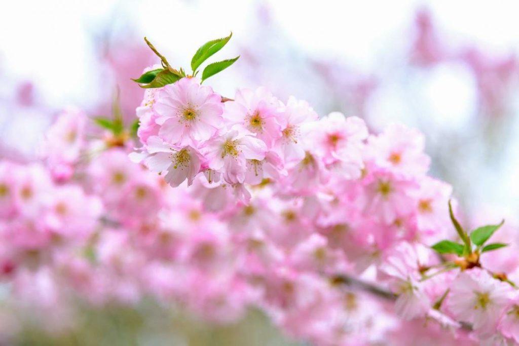 Spring Pests